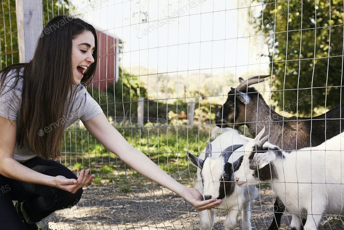 A young woman crouching down and feeding a group of goats through a wire fence.