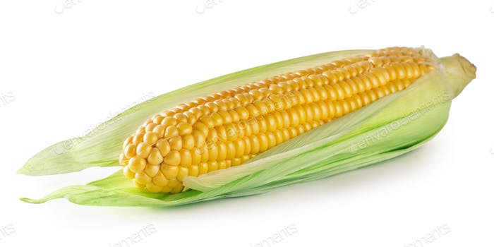 Ripe corn in leaves