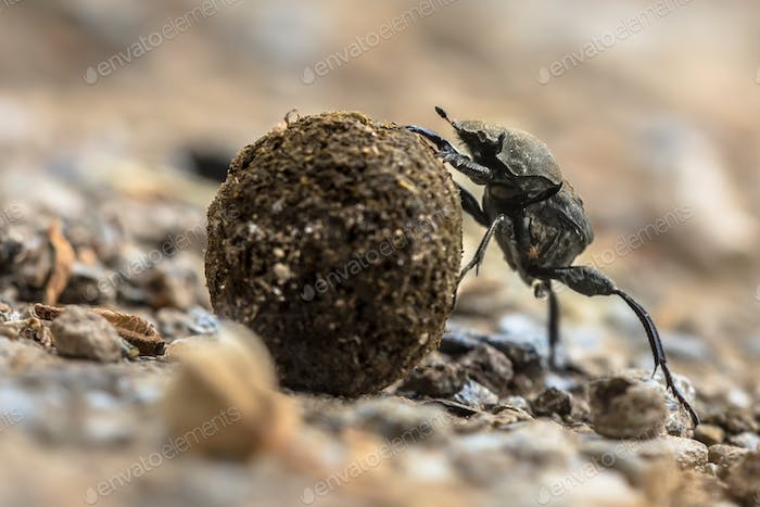 plugging dung beetle solving problems