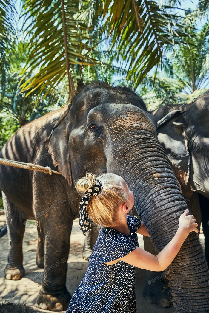 Little girl hugging the trunk of a large Asian elephant
