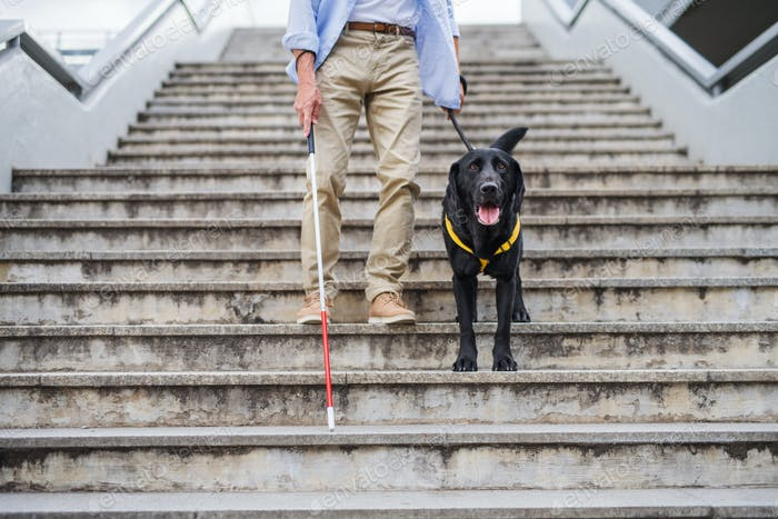 Senior blind man with guide dog walking down the stairs in city, midsection