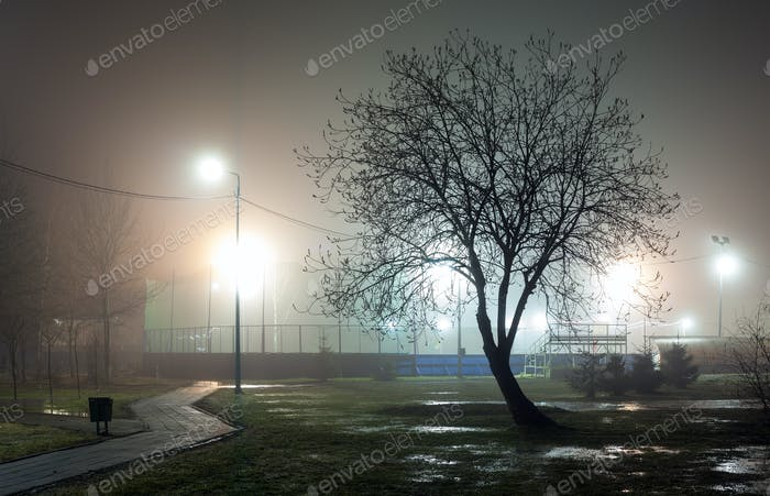 Silhouette of a tree without foliage against a background of fog in an urban park