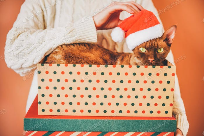 Beautiful purebred cat with Christmas hat. New year. Christmas animals.
