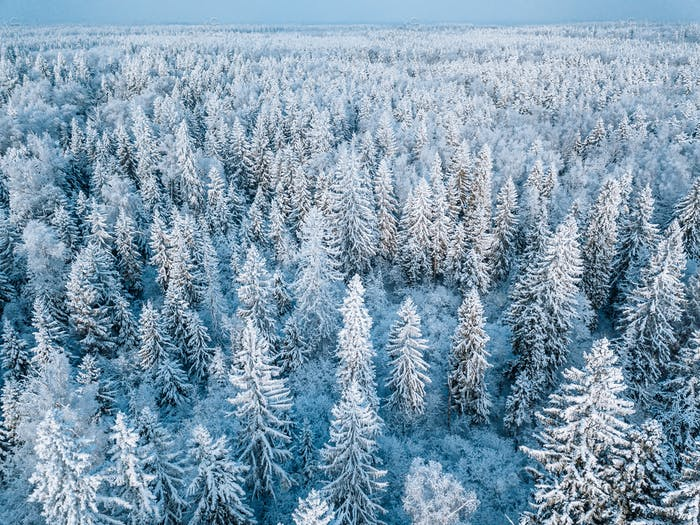 Aerial view of snow winter forest with frosty trees