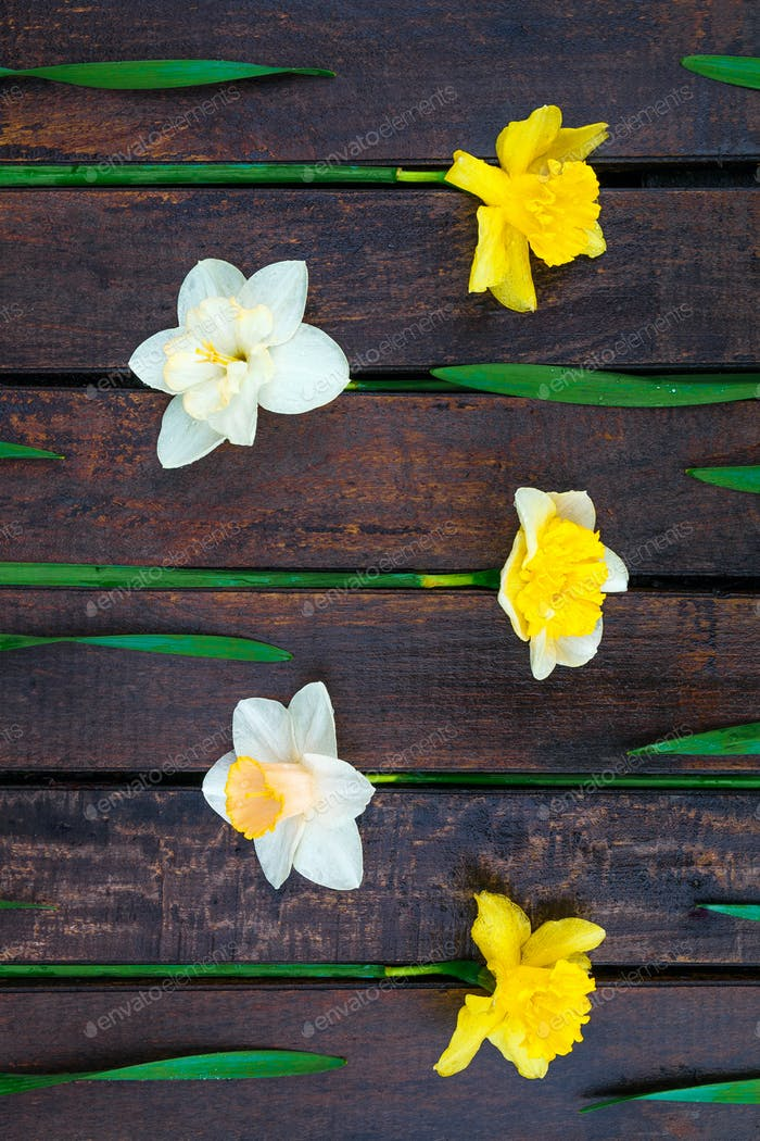 Narcissus on the wooden background.