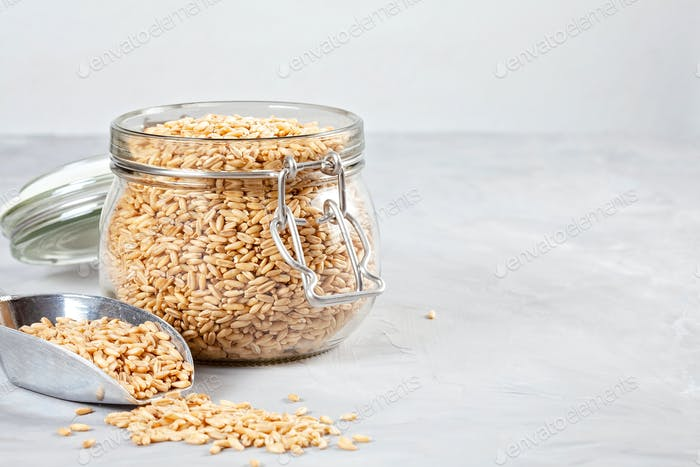Oat grains rich source of fiber and protein