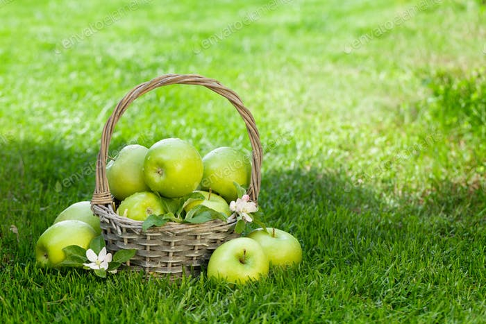 Fresh garden green apples