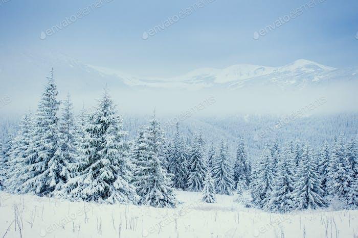 Winter landscape glowing by sunlight.
