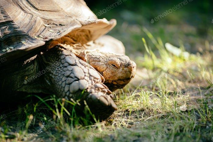 Schildkröte im freien