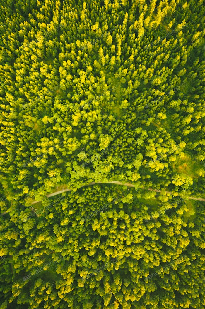Aerial view of green alpine forest. Drone shoot