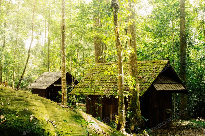 house and stone in forest