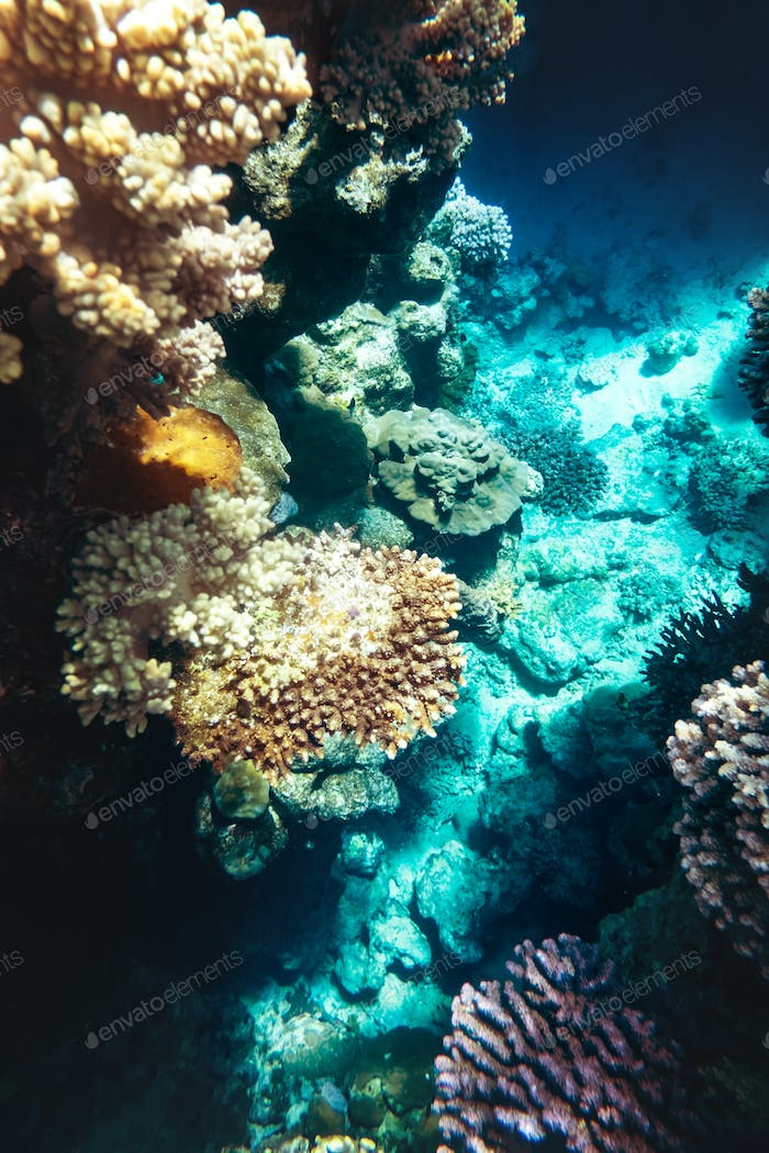 Coral reef colony in Red sea in Egypt