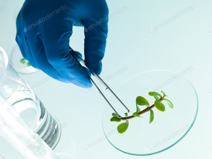 studying a plant in the lab