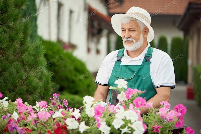 Älterer männlicher Gärtner kümmert sich um Blumen
