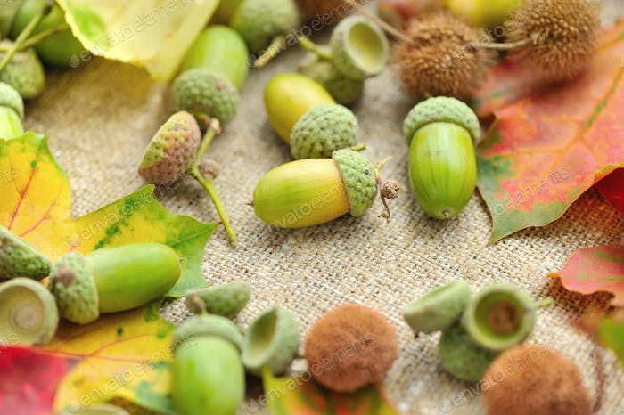 Acorns with autumn leaves on sacking