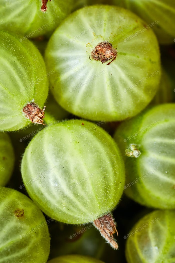 Close up picture of ripe gooseberries.