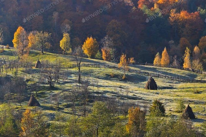 Herbstweide