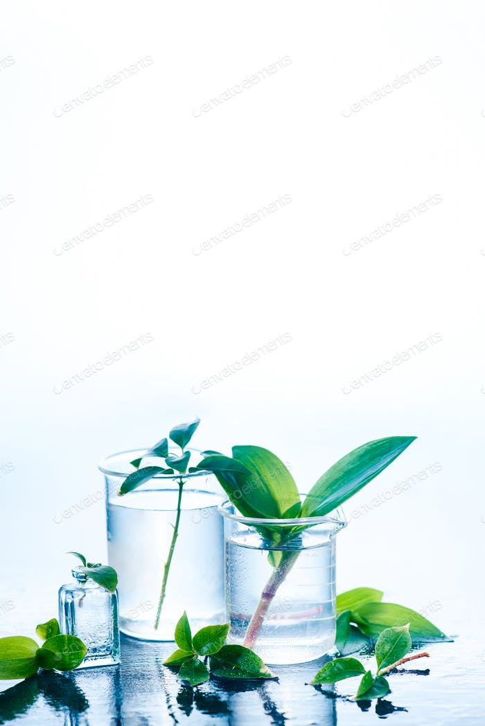 Medical plants in laboratory glassware on a white background with copy space. Perfume and cosmetics