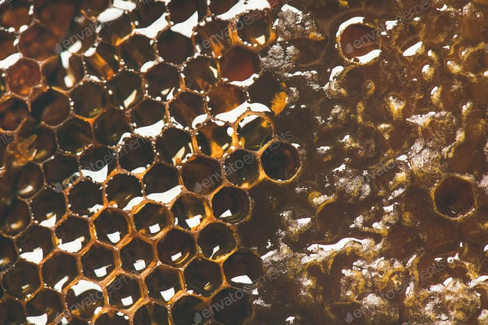 Bee honeycomb texture, wallpaper or background, top view, close-up