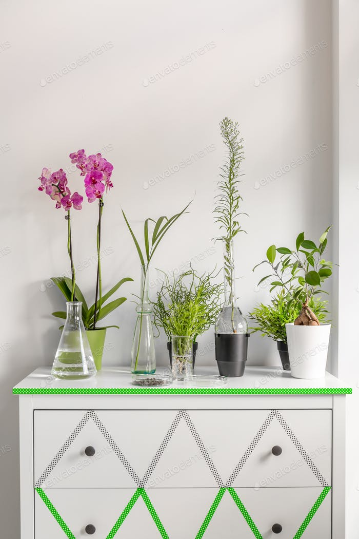 House plants on a white chest of drawers decorated with washi tape