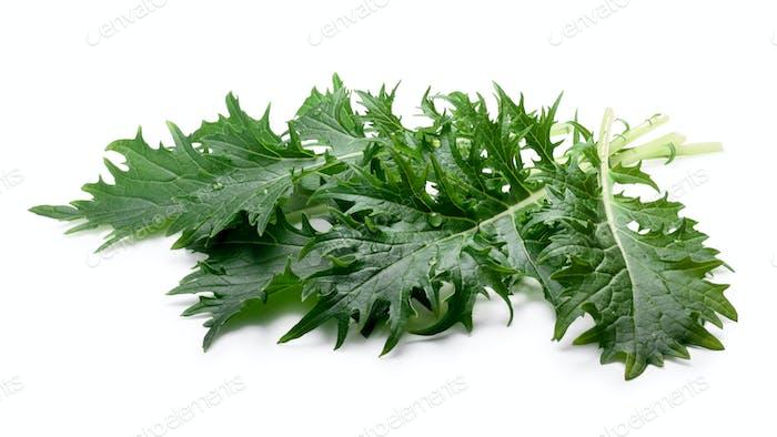 Ensalada de hojas Mizuna (mostaza japonesa), caminos