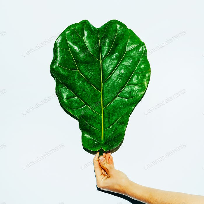 Tropical Leaf. Green concept. Minimal modern art
