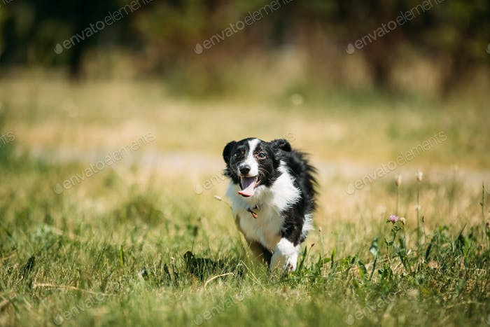 Funny Small Mixed Breed Dog Playing In Green Grass
