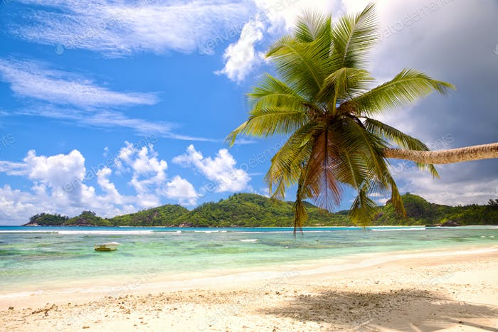 Palmenstrand und weißer Sand
