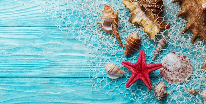 Summer background with sea shells