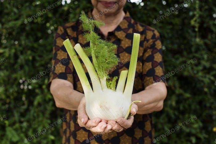 Closeup of hands holding fresh organic fennel