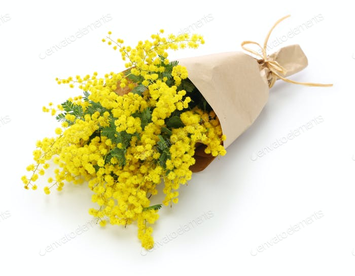 mimosa bouquet isolated on white background