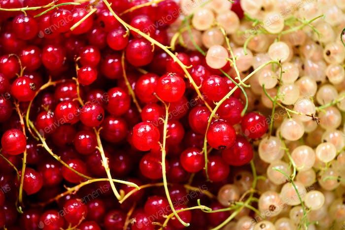 Hintergrund von roten und weißen Johannisbeeren Beeren. Draufsicht, Kopierraum. Veganes und vegetarisches Konzept