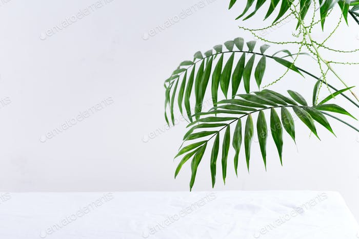 Exhibition place for product on a white background with palm leaves and shadows. . Showcase mockup