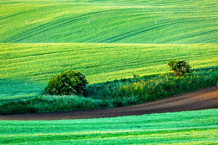 Rolling landscape of  South Moravia in the mornin