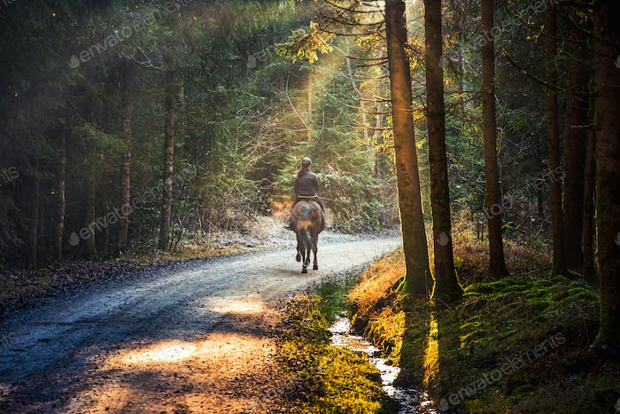 Woman riding a horse on a path in forest