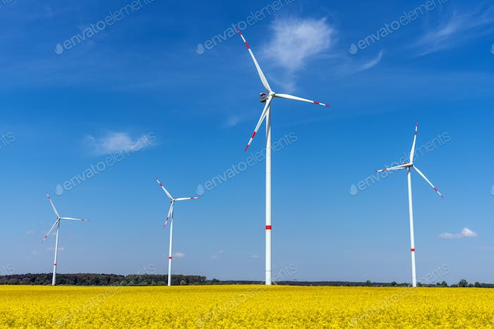 Wind energy turbines and a flowering canola field