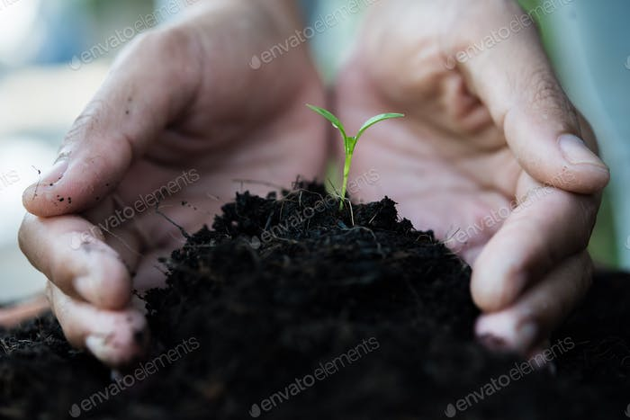 Women hand are planting the seedlings into the soil.