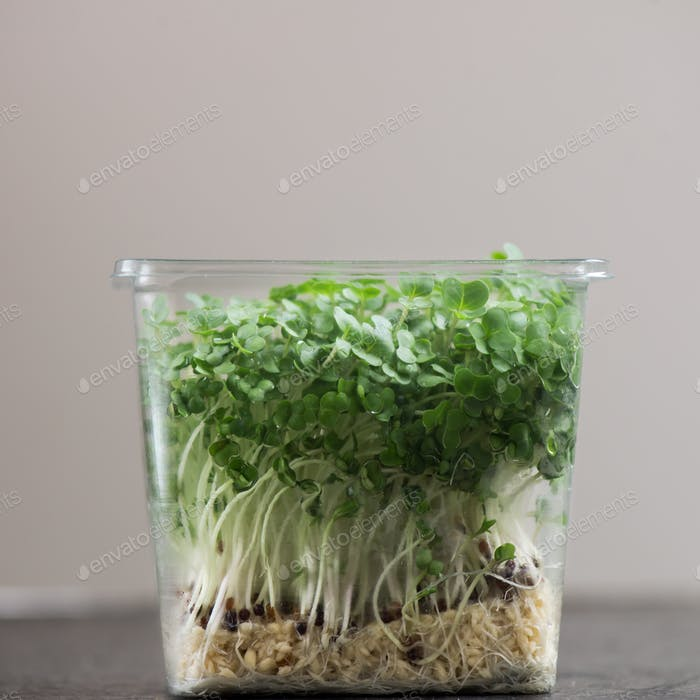 Frischer Kresssalat auf Kunststoffbehälter