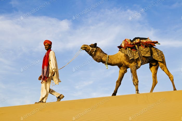 Indigenous Indian Man Walking Through The Desert With His Camel