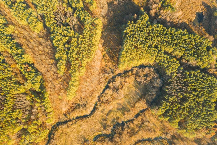 Aerial View Green Forest In Deforestation Area Landscape. Top View Of Woods. European Nature From