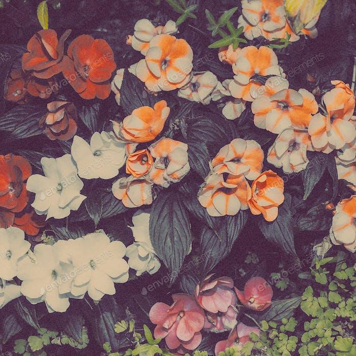 Flowers background Minimal art design idea