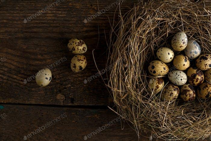 Frische Wachteleier in einem Nest auf einem hölzernen Hintergrund