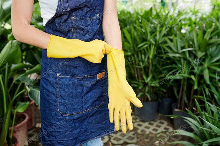 Florist putting on rubber gloves