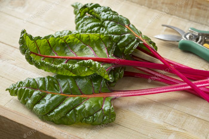 Red stemmed chard and leaves