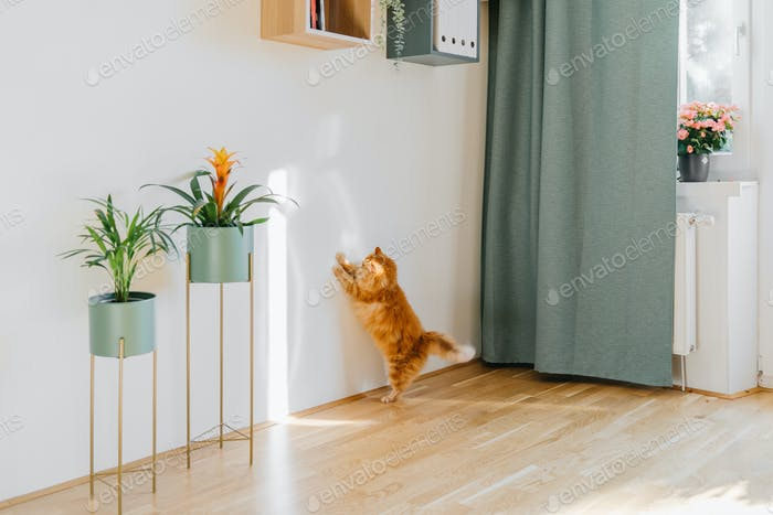 Cute ginger cat playing with sun beam indoors