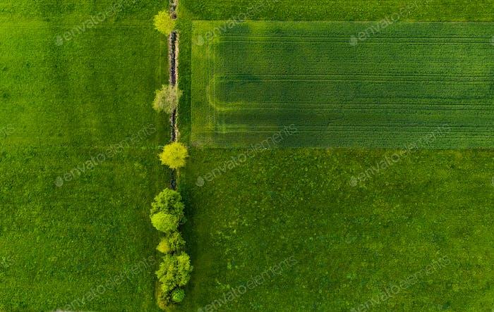Reihe von Bäumen unter Bewässerungskanal in einem Feld.