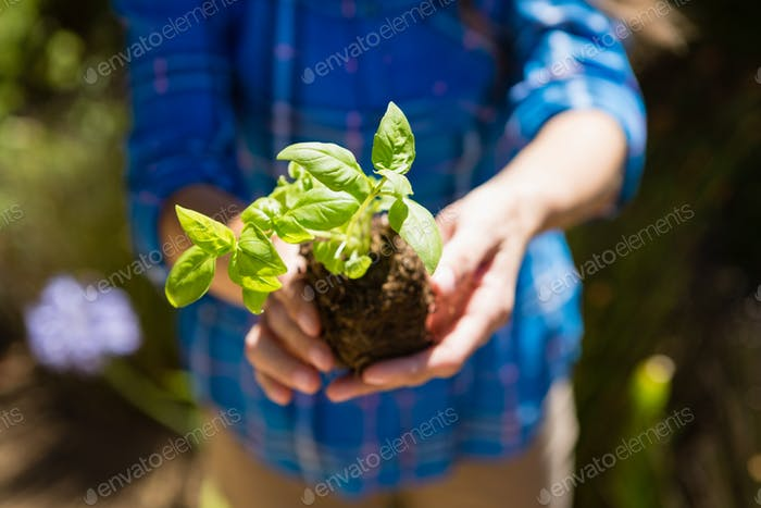 Mid section of woman holding sapling in garden
