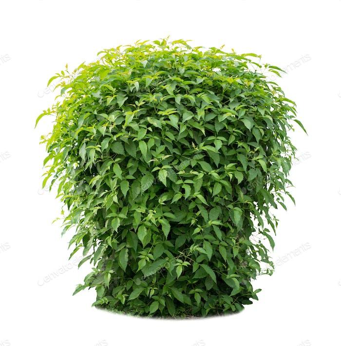 Green lush