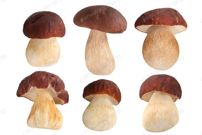 Ceps porcini b. edulis mushrooms set, paths
