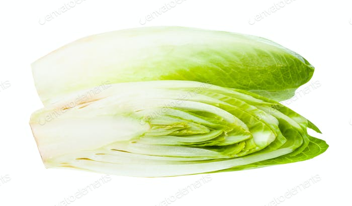cut Belgian endive (white Common chicory) isolated